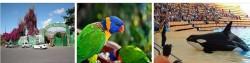 Зоопарки Испании Лоро-Парк и Monkey Park на Тенерифе