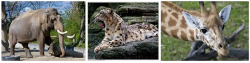 Зоопарки Швейцарии