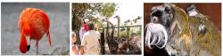 Сафари парки для отдыха с детьми