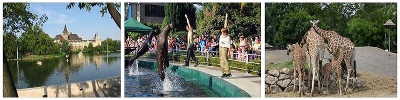 Зоопарк в Будапеште, Венгрия